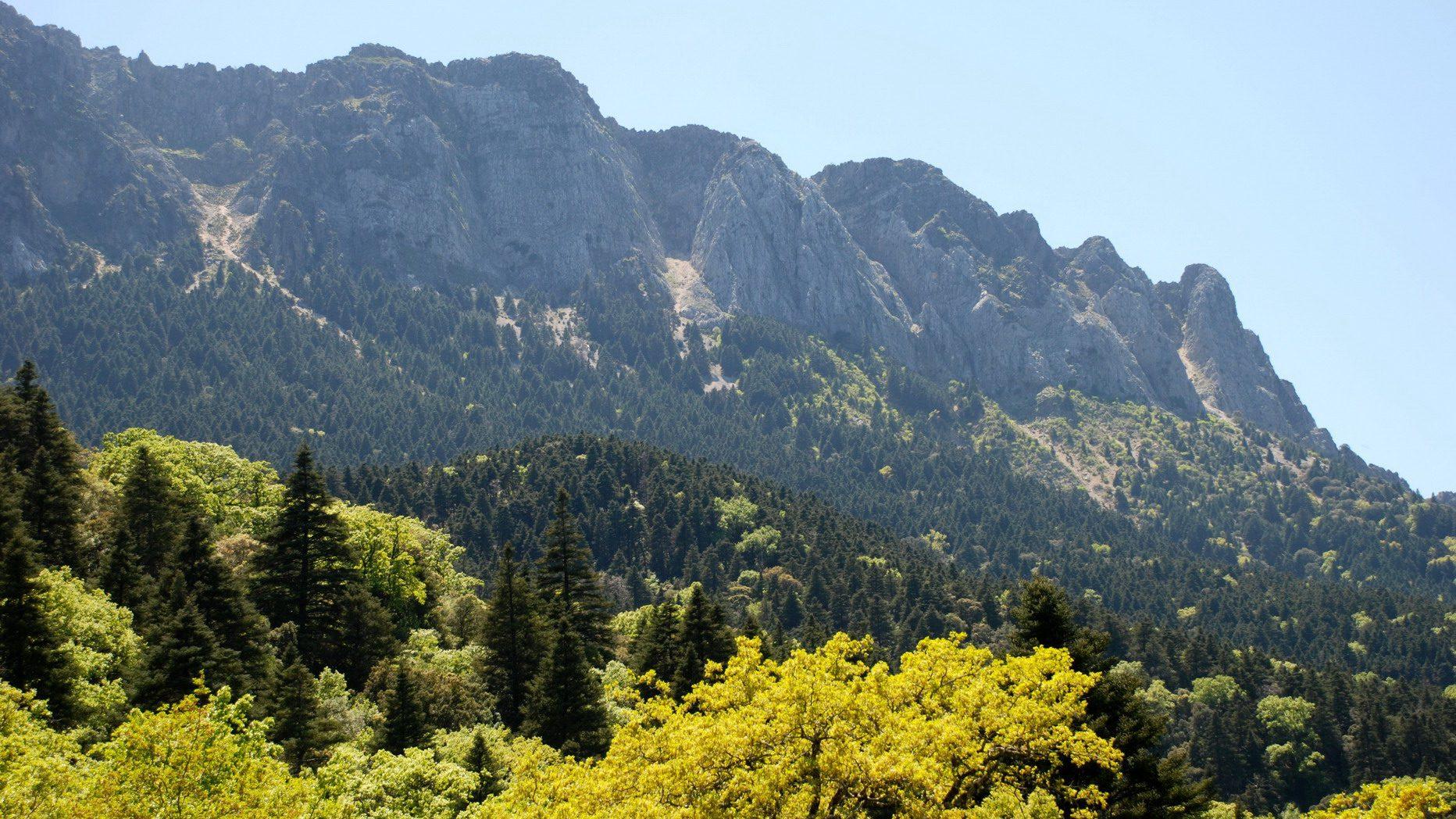 Senderismo en el Pinsapar. Parque Natural de Grazalema. Andalucia