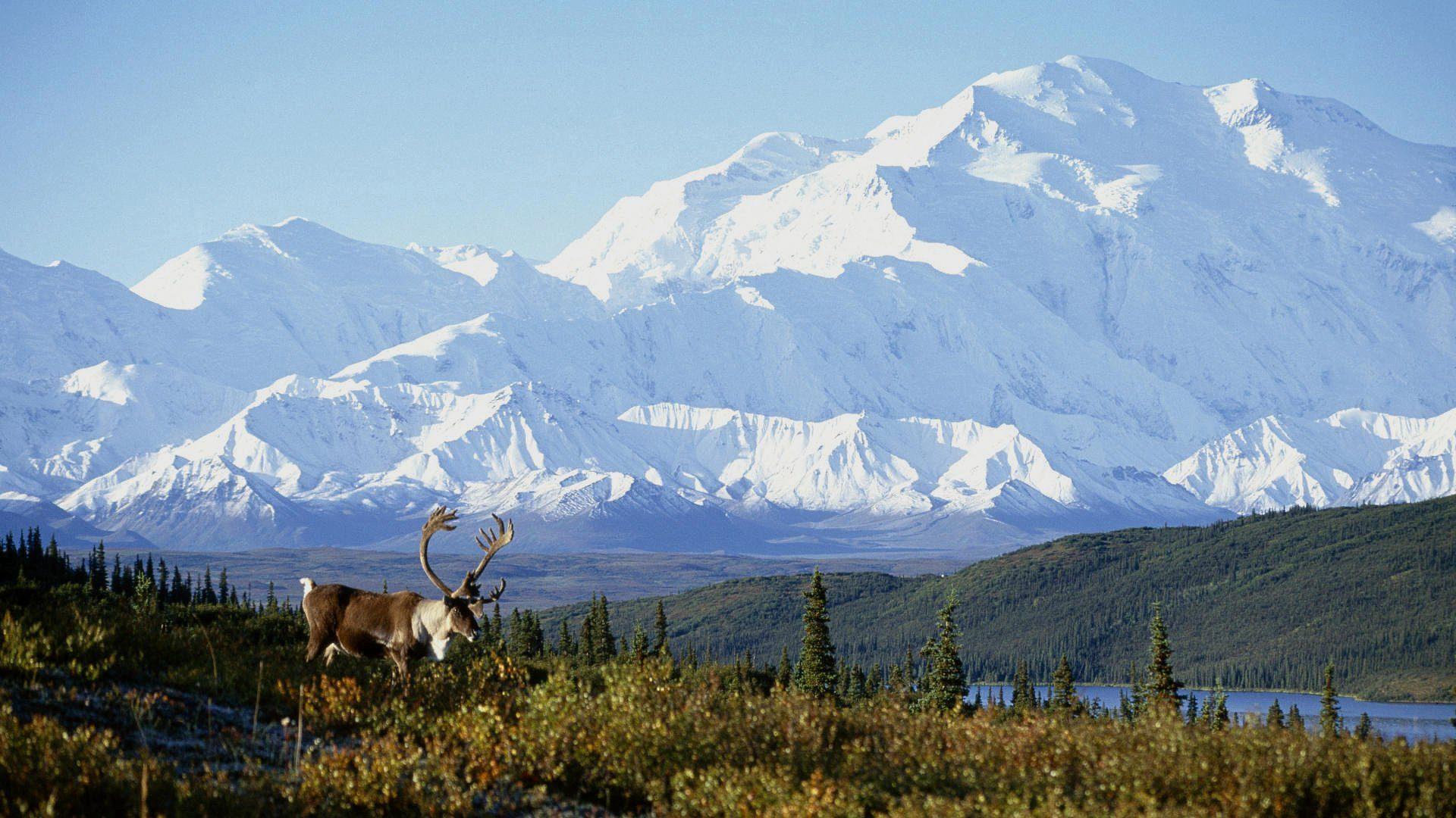 Senderismo en Alaska. La ultima frontera.